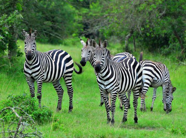 3 Days Best of Lake Mburo National Park in Uganda