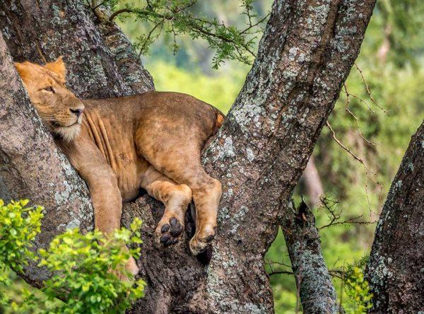 10 Days Wildlife and Gorilla Tracking