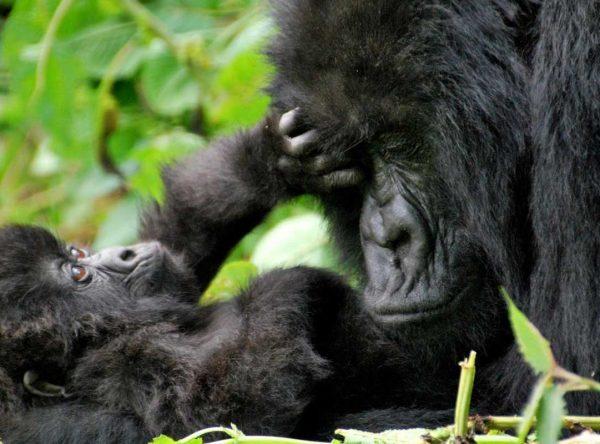 4 Days Lake Bunyonyi & Bwindi Forest Gorilla Tracking Safari