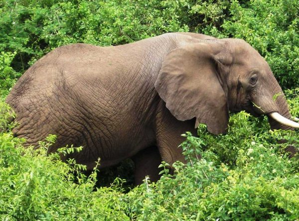 5 Days Murchison Falls NP Safari